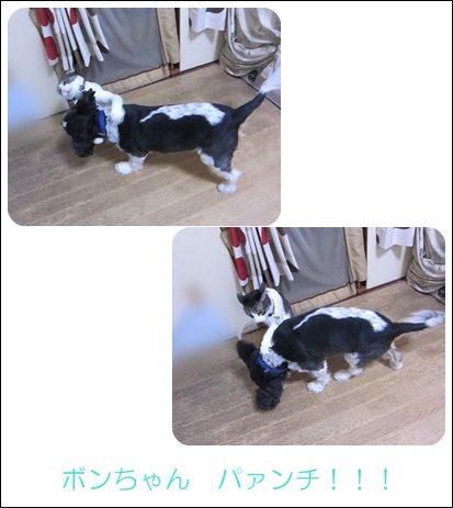 cats1_20121017182654.jpg