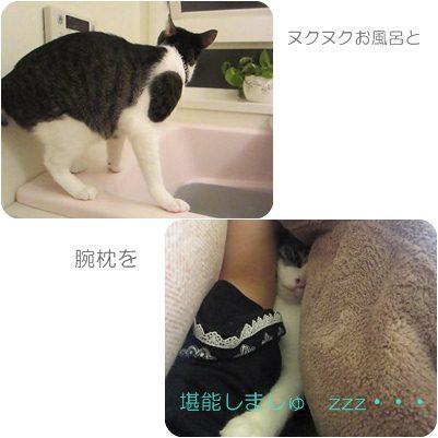 cats1_20121021005210.jpg