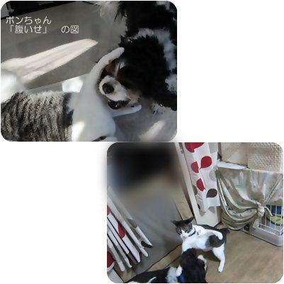 cats1_20121022192835.jpg