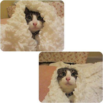cats1_20121027193736.jpg