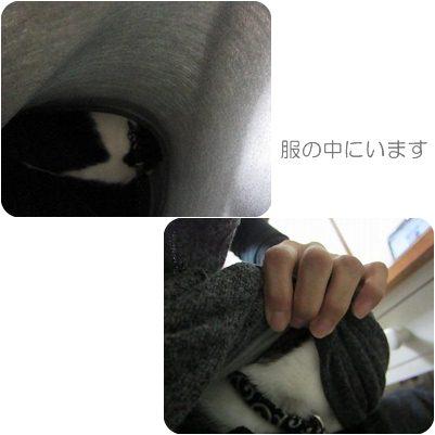 cats1_20121029231403.jpg