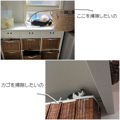 cats1_20121117171456.jpg