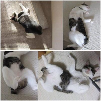 cats1_20121119194559.jpg
