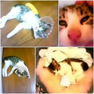 cats1_20121122234539.jpg