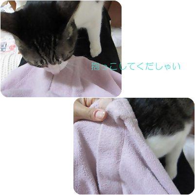 cats1_20121125234927.jpg