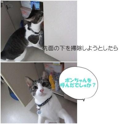 cats1_20121208184407.jpg