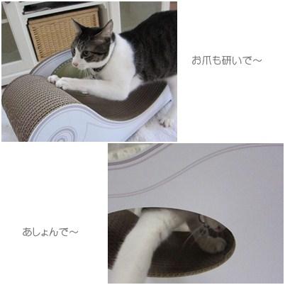 cats1_20121209155317.jpg
