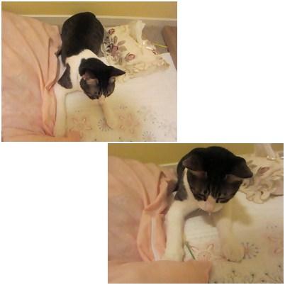 cats1_20121214195007.jpg