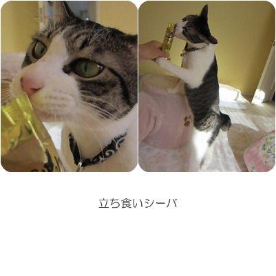 cats1_20121217171350.jpg