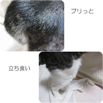 cats1_20121227003035.jpg