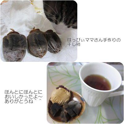 cats1_20121229192330.jpg