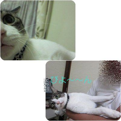 cats1_20121230173049.jpg