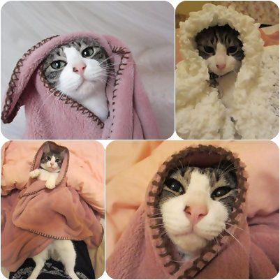 cats1_20130110020425.jpg