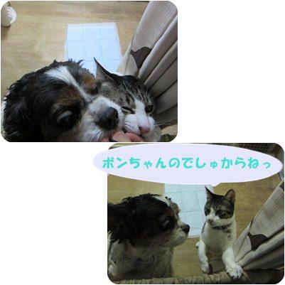 cats1_20130116202126.jpg