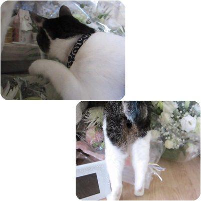 cats1_20130118181327.jpg
