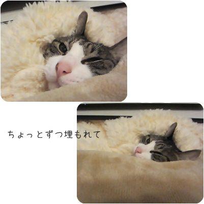 cats1_20130123195110.jpg