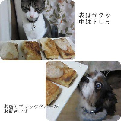 cats1_20130126171847.jpg