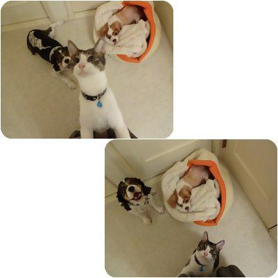 cats1_20130209154502.jpg