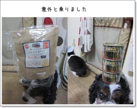 cats1_20130213205831.jpg