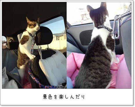 cats1_20130306020721.jpg