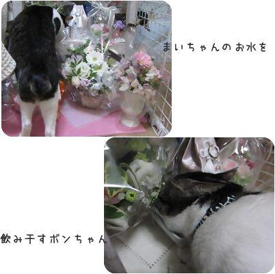 cats1_20130414172529.jpg
