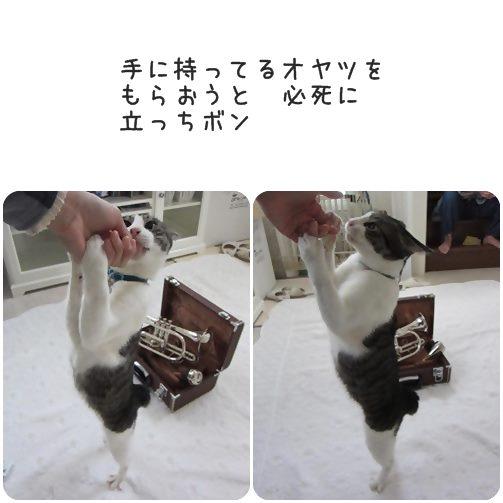 cats1_20130608175019.jpg