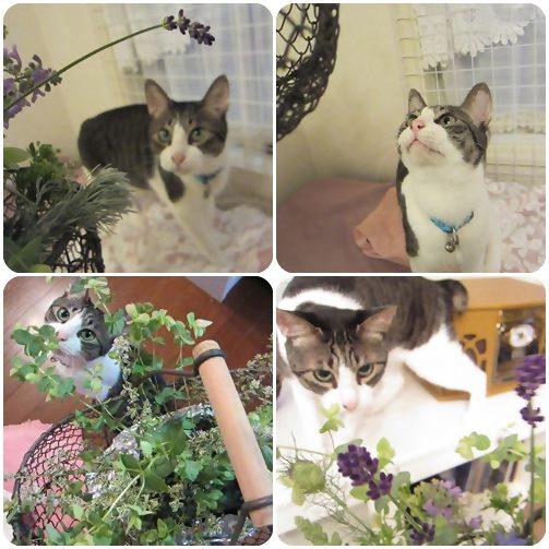 cats1_20130624234821.jpg