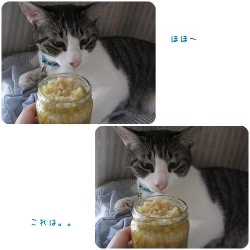 cats1_20130626000329.jpg