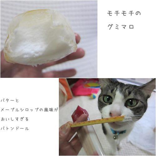 cats1_20130712200418.jpg