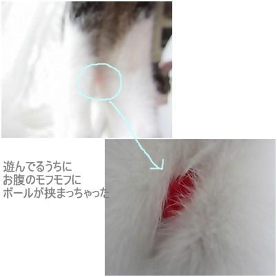 cats2_20120721175738.jpg