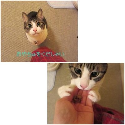 cats2_20120728153017.jpg