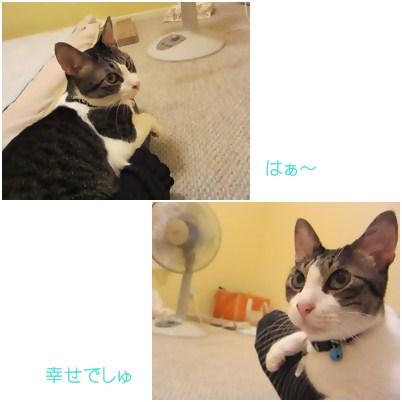 cats2_20120810140245.jpg