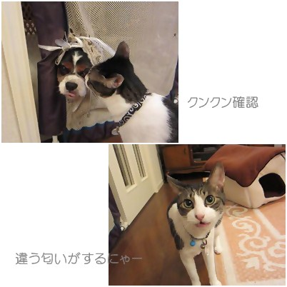cats2_20120817152807.jpg