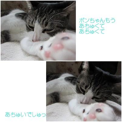 cats2_20120818164208.jpg