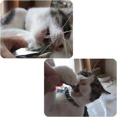 cats2_20120909171933.jpg