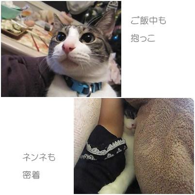 cats2_20120914202526.jpg