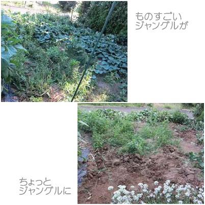 cats2_20120916235846.jpg