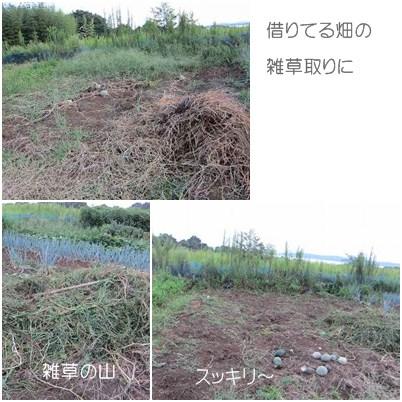 cats2_20120922000112.jpg