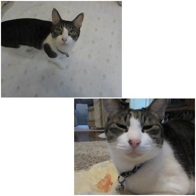 cats2_20121002174056.jpg