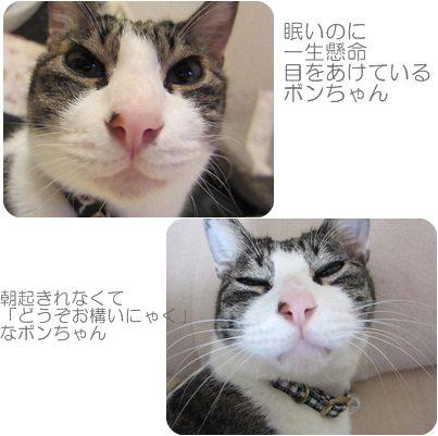 cats2_20121106193235.jpg