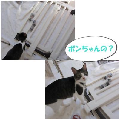 cats2_20121119194600.jpg