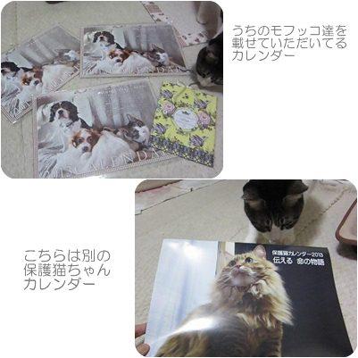 cats2_20121126205331.jpg