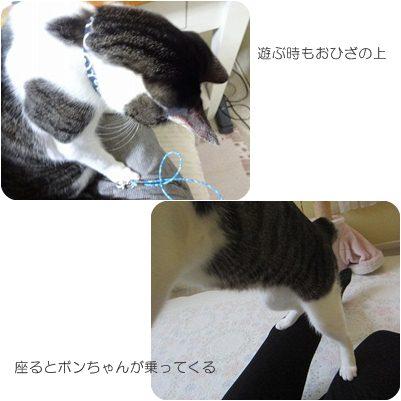 cats2_20121128202550.jpg