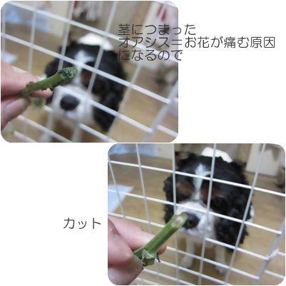 cats2_20130108185209.jpg