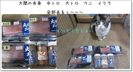 cats2_20130212014415.jpg