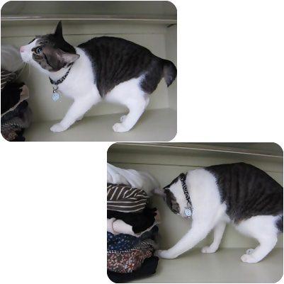 cats2_20130305000222.jpg