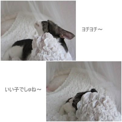 cats3_20120721175738.jpg