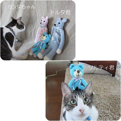 cats3_20120802180421.jpg