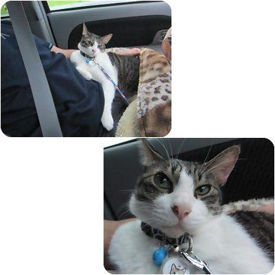 cats3_20120803162304.jpg