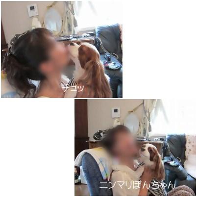 cats3_20120816183231.jpg